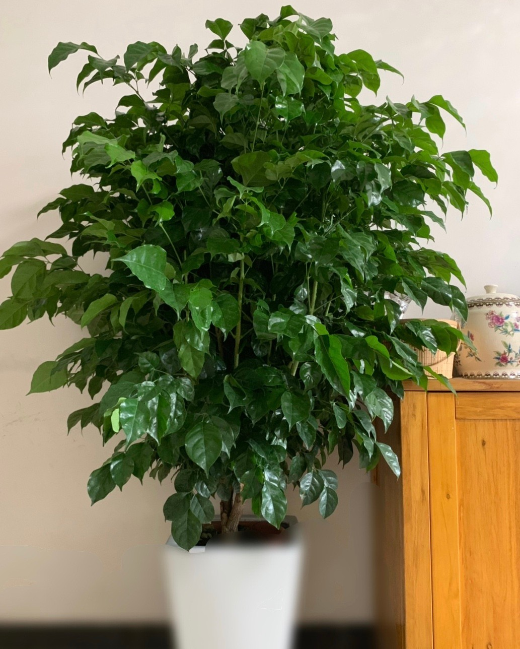 绿宝室内种植好还是室外种植好
