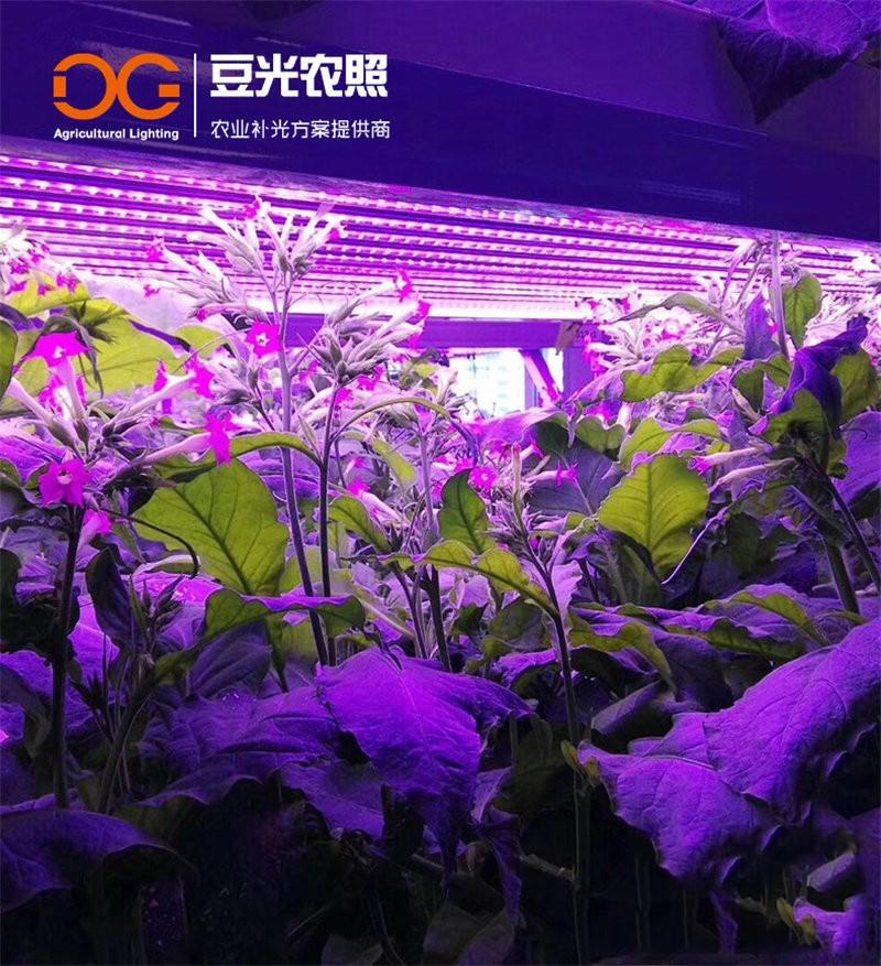 T8植物生长灯 植物工厂室内组培LED植物灯花卉多肉补光灯