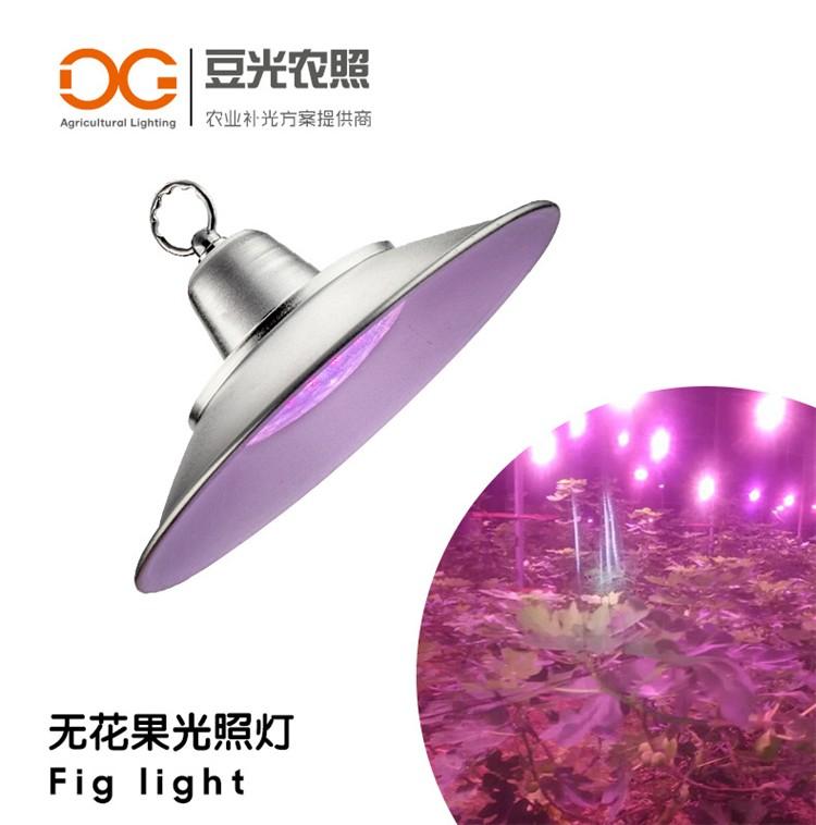 无花果专用光照灯\LED植物生长补光灯\新梢生长花芽分化果实上色