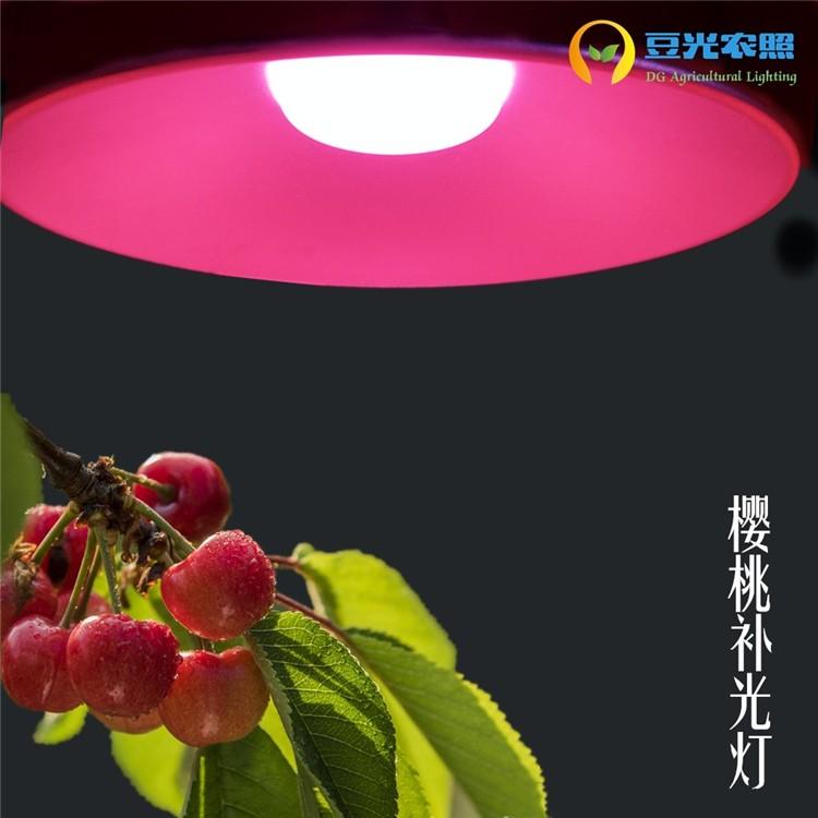 大樱桃专用补光灯LED全光谱植物生长补光灯 反季节栽培 促进萌芽